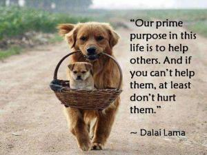Help others Dalai Lama